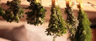 лекарственные травы от кашля