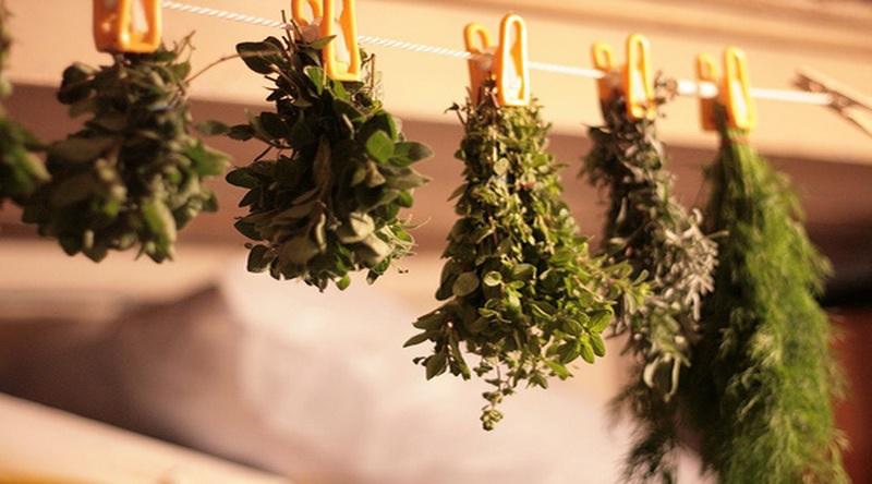 Травы от кашля: отхаркивающие при приступах кашля и выводящие мокроту, лекарственный травяной сбор