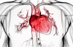 Заболевания сердцаи сосудов