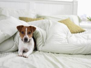 шерсть в постели