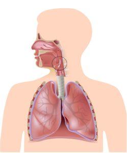 гортанный нерв